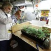 Marijuana Legalization: scientists want more access to pot for research, and most Millennials agree