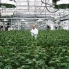 Specialisation in Cannabis Industry is inevitable!