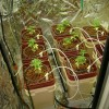 How to Grow Weed with Hydroponics?