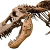 Man arrested for smuggling dinosaur bones