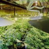 Odor control for a safe cultivation