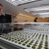United States' first marijuana resort to be opened in South Dakota